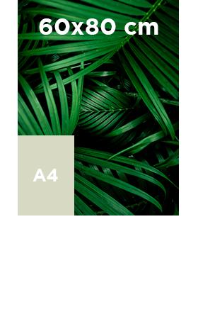Affiche 60x80