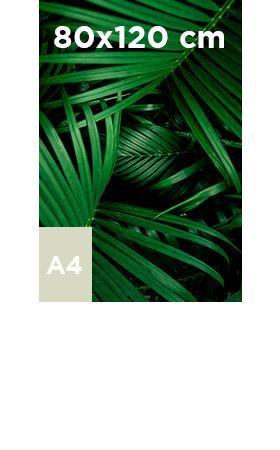 Poster-adhésif-80x120
