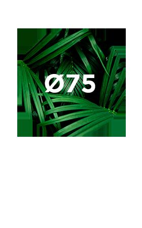 Miroir-75