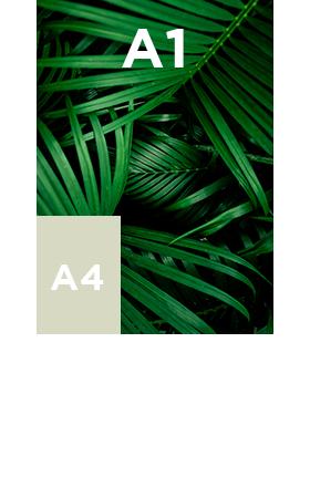 Vinyle-transparent-standard-A1